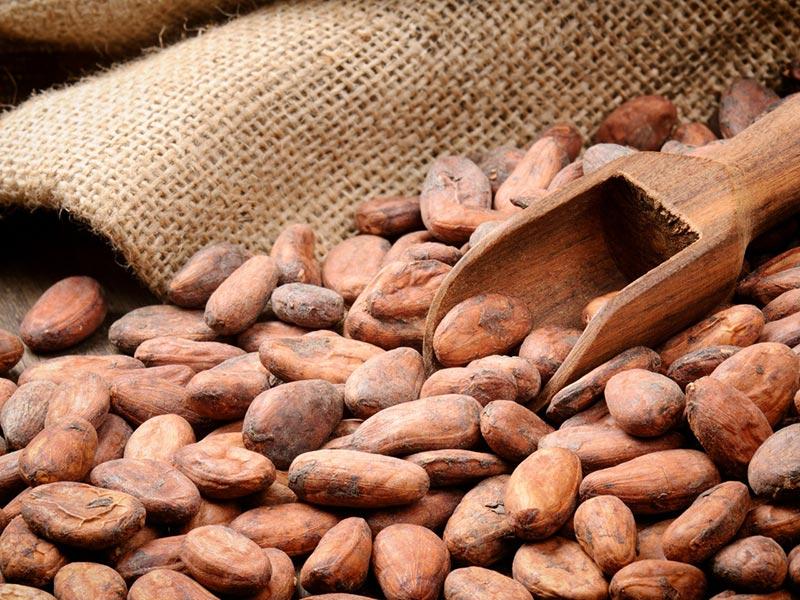 Superfoods Grosshandel Kakaobohnen